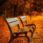 benches 560435